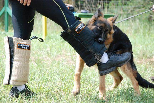 Foto jambierres pequeños de Dingo Gear.