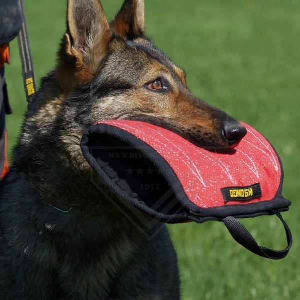 Dingo Gear manguito mordido.